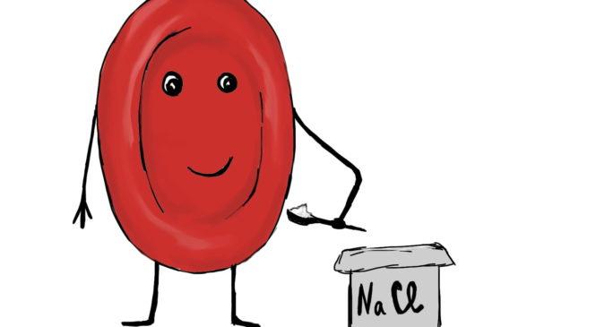 Почему кровь соленая?